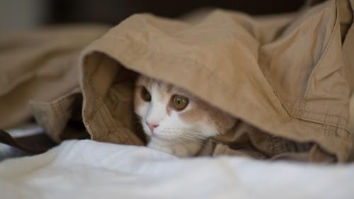 Cats-01-010.jpg