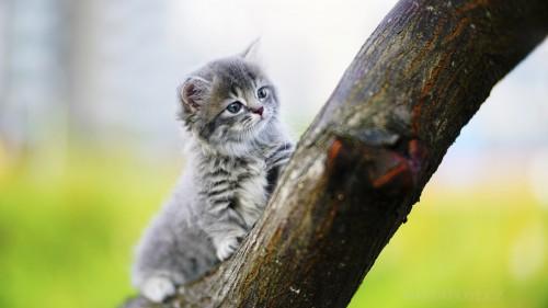 Cats-01-014.jpg