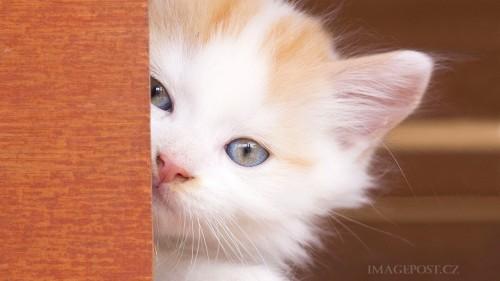 Cats-01-015.jpg