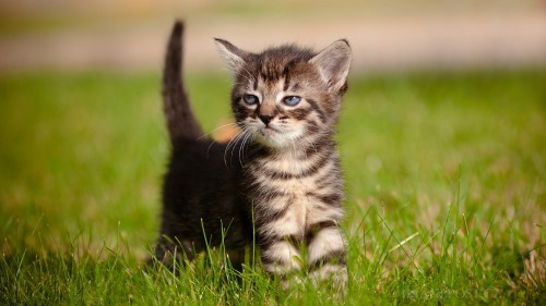 Cats-01-018.jpg