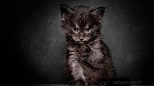 Cats-01-019.jpg
