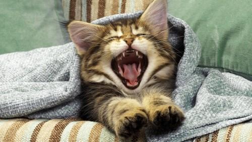 Cats-01-020.jpg