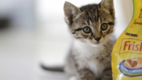Cats-01-021.jpg
