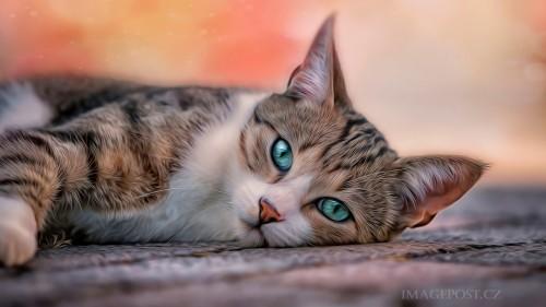 Cats-01-026.jpg
