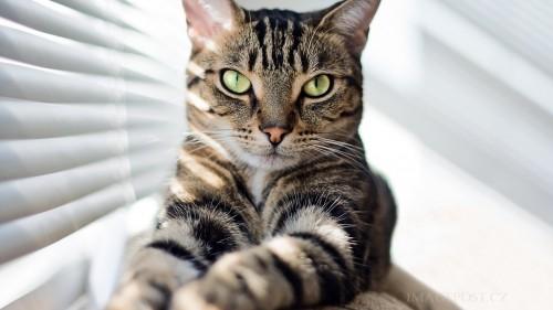 Cats-01-031.jpg