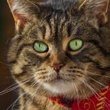 Cats-01-035