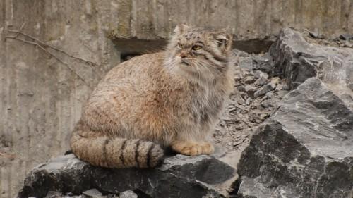 Cats-01-037.jpg