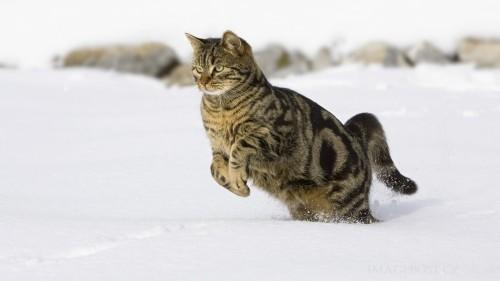 Cats #01 (038)