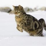 Cats-01-038
