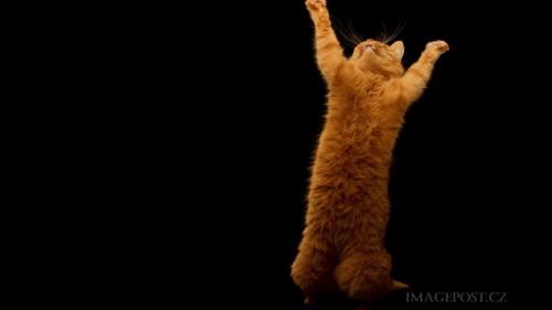 Cats-01-039.jpg