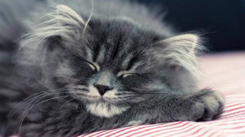 Cats-01-040.jpg