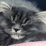 Cats-01-040