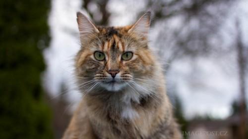 Cats-01-044.jpg