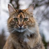 Cats-01-044