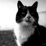 Cats-01-046