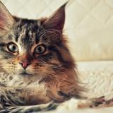 Cats-01-047