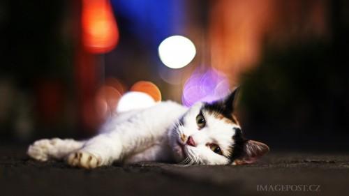 Cats-01-048.jpg