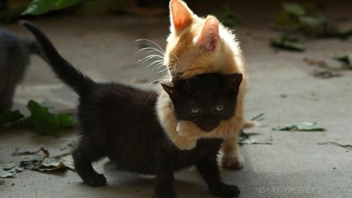 Cats #01 (049)