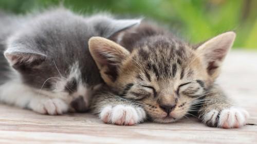 Cats-01-052.jpg