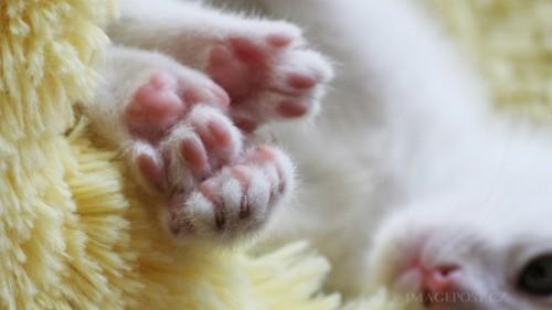 Cats-01-059.jpg