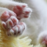 Cats-01-059