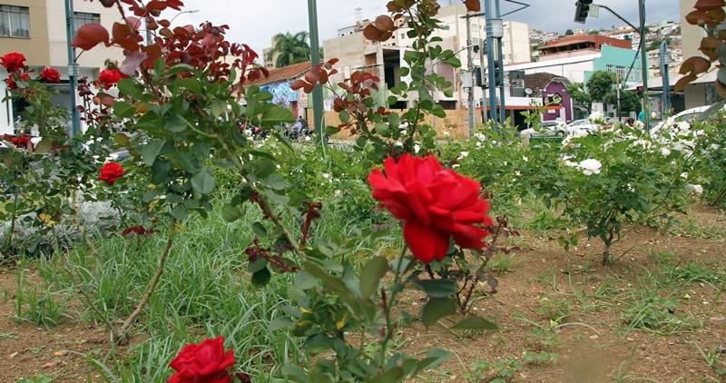 Poços de Caldas, a cidade das rosas (Foto: Poços de Caldas (MG) - Henrique Fonseca)